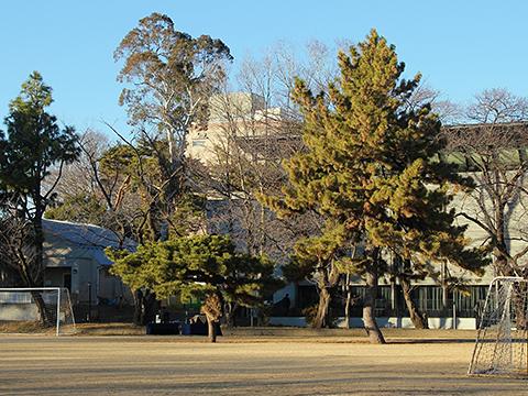 松芝園グラウンドと松の木